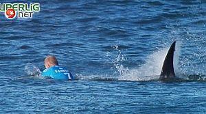 Dünya şampiyonuna köpekbalığı saldırdı